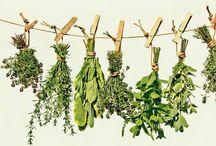 heilkräuter und pflanzen