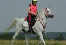 Ride Videos / Endurance riding videos