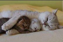 cats... like my family
