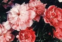 FLORALS FOREVER / Favorite Flowers & Plants