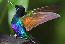 Hummingbirds / by Spatrek