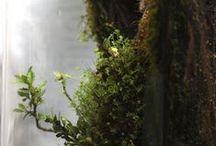 Jardin d'Eden / Terrarium et jardins
