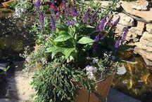 Our Sun Perennials