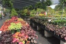 Our Shade Perennials