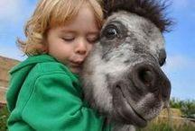 Gotta Love Horses