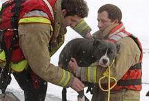 Superheroes of Animal Rescue