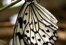 Butterflies,dragonflies and bats