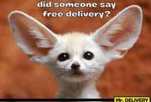 Mr. Delivery Memes / A collection of our best memes
