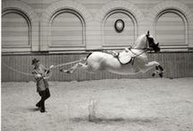 HORSE LIPIZZANER / by Mary Dumke