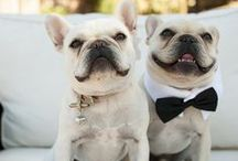 Pups at the Party / Is your dog participating in your big day? Check out some of these ideas!