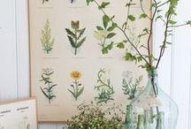 Plantas / by Nancy Naranjo
