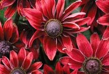 Garden Plants & Seeds / by Heather P