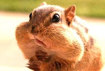 Cute Animals / Cute and funny animal pictures