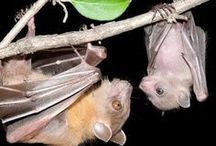 Critters: Bats / by Ulrich