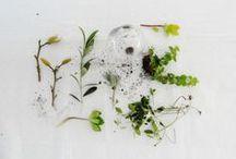 Plants to grow