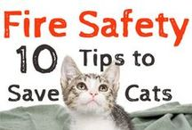 Pet Safety