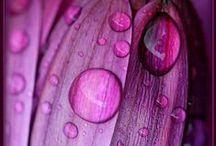 Μωβ // Purple mauve...
