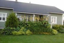 My garden  / Otoksia omalta pihamaalta