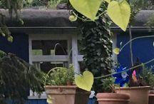 Bauwagen / Bauwagen, Outdoor, Garten