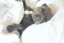 a n i m a l s ♡ / How much more adorable can it get?!