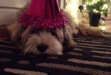 My Dog<3 / ❤️Love my dog, the tibbetan terrier, Malou❤️
