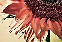 Mis amadas flores....