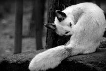 Fauna ^_^