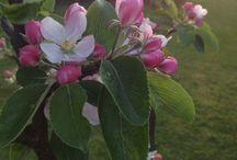 My garden <3 / I love my garden<3