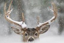 Season . Winter / All things Winter.