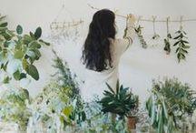 Botanicals / Plants, plants and more plants!