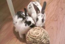 Bunnies / Ideas for pet bunnies