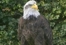 Roofvogels / Roofvogel show in Zoetermeer