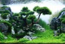 aquariums et bassins