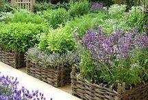 Jardines de vegetales - Huertas / Inspiración para hacer un jardín de vegetales y hierbas en tu casa.