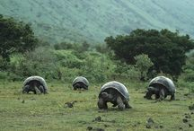 The Islands of the Tortoises 2015