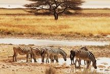 Explore / Africa / Africa travel tips, inspiration, and destination guides.