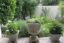My South-African Garden / What a joy!!!