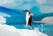 Explore / Antarctica / Antarctica travel tips, inspiration, and destination guides.