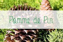 DIY Pommes de pin / L'essence de prédilection de Gascogne Bois est le Pin Maritime. Cet arbre provenant des Landes de Gascogne produit des cônes ou pommes de pin. Dans la déco, la pomme de pin peut être détournée de 1001 façons. Facile à trouver dans nos forêts françaises, la pomme de pin sera bientôt votre alliée déco!