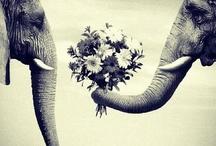 Animals / by Hannah Schneider