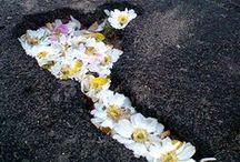 //Flowers//