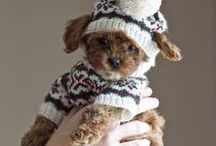 Dog Sweaters / Do you force your dog to wear funny sweaters to keep warm during winter? Share with us, tell your friends to vote, and you could win! Enter here: http://on.fb.me/1tCcegq.