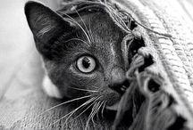 -a cat board-
