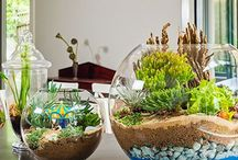 -plants-