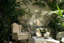 Indoor Plants / Plants