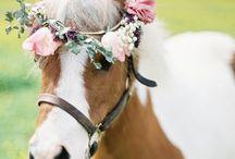 Ponys / Ponys