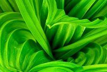 { Green }