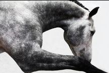 Equine / Some beautiful photographs of horses
