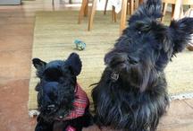 scottie dog / The iconic Radley icon - The Scottie Dog !