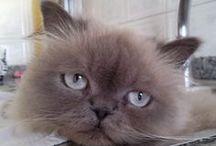 AREA GATOS / Todo sobre nuestros pacientes felinos: sus fotos, sus travesuras, algunas fotografías de carácter médico  www.veterinariogatos.com Somos socios del ISFM. Tenemos sala de espera exclusiva para felinos en determinados horarios. Consulta nuestra web de gatos: www.veterinariogatos.com